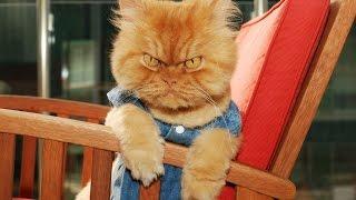 Смешные кошки :)  Часть 251 - Не шути со зверем! :))