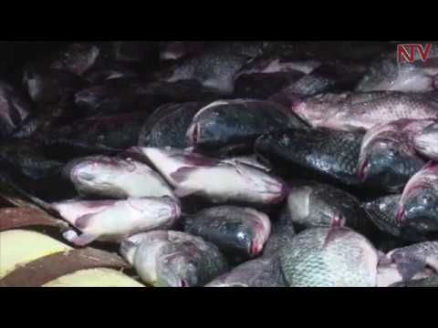 NTV GREEN: How to Aquaculture blends with eco-systems