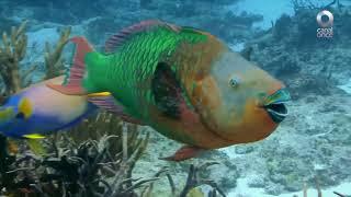 Factor Ciencia - Maravillas marinas, parte 1