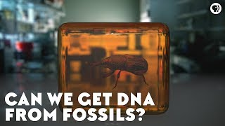 Can We Get DNA From Fossils?