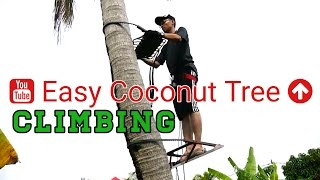 preview picture of video 'Tree Climbing Techniques Tutorial | How To Climb Tree'