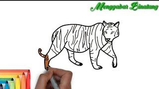 900 Gambar Mewarnai Hewan Macan Terbaik