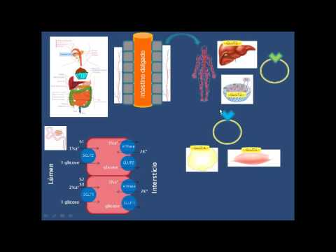 Caneta seringa para insulina NovoPen 4