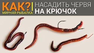 Как правильно насадить червя на крючок?
