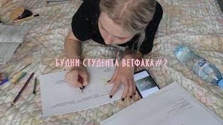 Учись со мной|будни студента ветфака фото