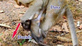 Million tears drop down | No one love Daniela, Even Dana bit her own baby Daniela