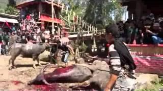 preview picture of video 'Endonezya'da Manda Kurban Töreni (  Dikkat!  Bazı sahneler rahat edici olabilir)'