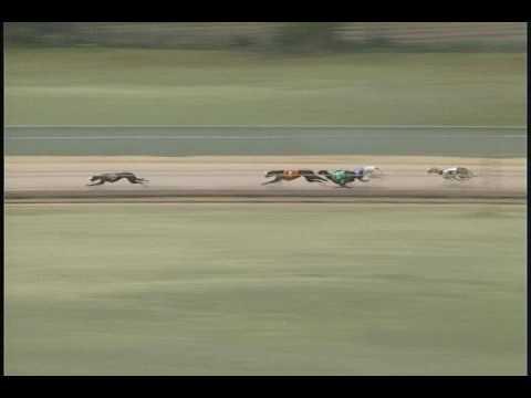 Race 43