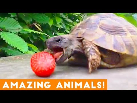 The Most Amazing Animals on Earth Compilation 2018