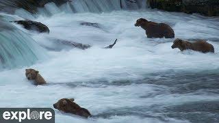 Brown Bears of Katmai Alaska Meditation powered by EXPLORE.org