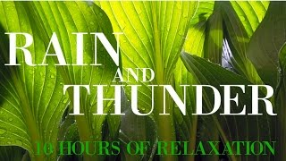 10 hours of Relaxation | Ambient Sounds of Summer Rain & Thunder | Deep Sleep