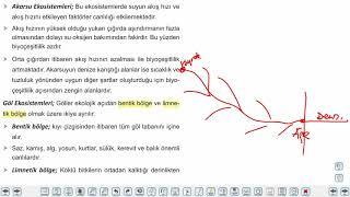 Eğitim Vadisi AYT Coğrafya 1.Föy Ekosistemlerin Özellikleri ve İşleyişi 4 (Su Ekosistemleri) Konu Anlatım Videoları