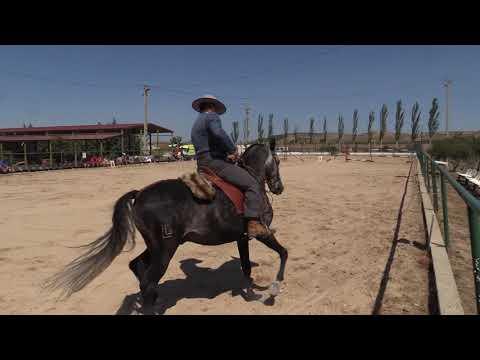 Equitación de Trabajo 280821 Video Doma 4