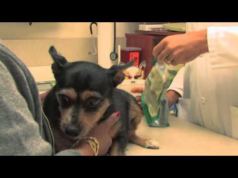 Greenies Weight Management - PETITE (20 Bones) 12oz Video