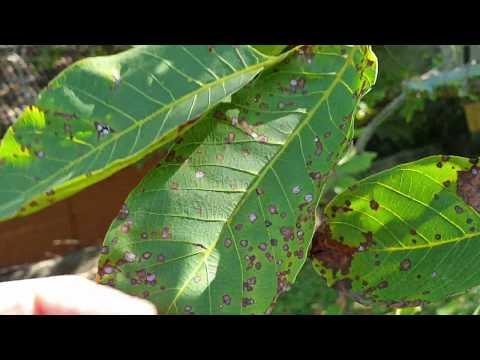 Hogyan lehet felkészülni az enterobiosisra
