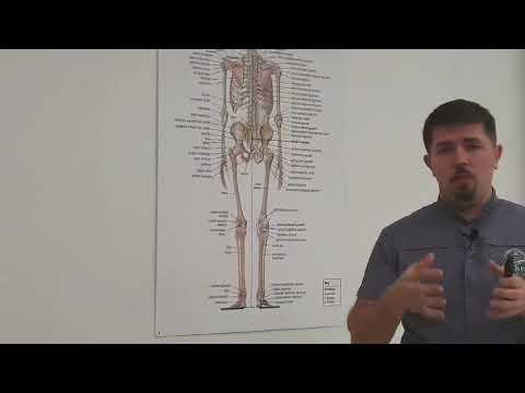 Artrita și artroza diferenței articulației genunchiului