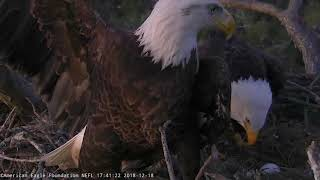 AEF NEFL Eagle Cam 12-18-18: Romeo Defends Nest from Female Eagle Visitor