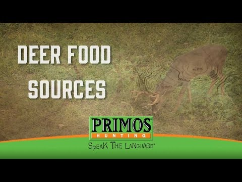 How To Find Food Sources for Deer video thumbnail