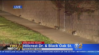 Bunnies Terrified As Woolsey Fire Rips Through Thousand Oaks Neighborhood