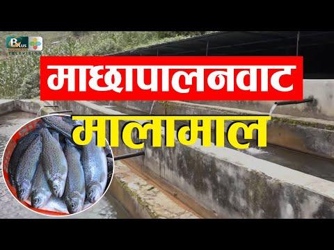 , title : 'Rainbow Trout Fish Farming in Nepal |  व्यावसायिक रेन्बो ट्राउट माछा पालनमा रम्दै युवा | BPLUSTV