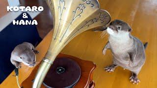 カワウソが初めてクラシックを聴いた時の反応が良すぎた Otters React to Classical Music