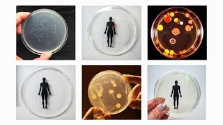 Smelfies, and other experiments in synthetic biology | Ani Liu