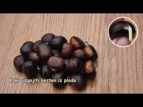 Video tutorial za hipertenziju