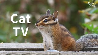 Cat TV: 8 Hours of Autumn Birds and Chipmunks, Water Sounds for Relax.