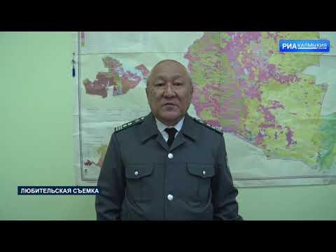 Управлением Россельхознадзора на территории Республики Калмыкия выявлены участки пашни, заросшие сорной растительностью