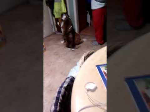 Female Dog -humping The Male