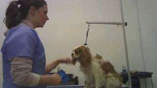 Tail Waggers TV: How to Brush and De-mat Your Dog