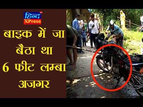 Video : बाइक में जा बैठा था 6 फ़ीट लम्बा अजगर, फिर आप ही देखिये कैसे उसको बाहर निकाला