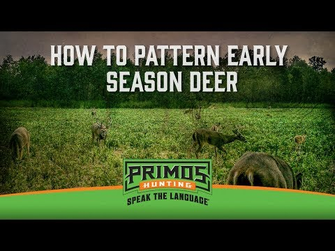 How to Pattern Deer With Trail Cameras in the Early Season video thumbnail
