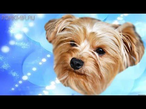 Орхит у собак | Причины | Симптомы | Профилактика.