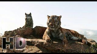 The Jungle Book (2016) - Sherekhan Kill Akela Scene | Hollywood MovieClips In Hindi