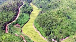 DRONE: Rice Paddies in Laos Mountain Valley