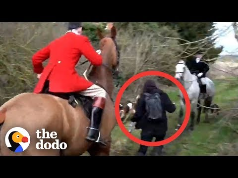 This needs some attention - foxhunting in the UK.