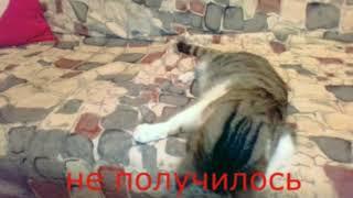мини подборка приколов в котами