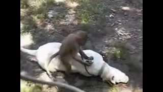 preview picture of video 'EL PERRO Y EL MONO  zoo tacuarembó .wmv'