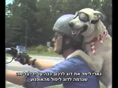 כלב על גלגלים - סיפור אנושי מקסים!