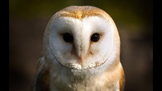 Owl Documentary - Fascinating Facts About Owls (New Documentaries)