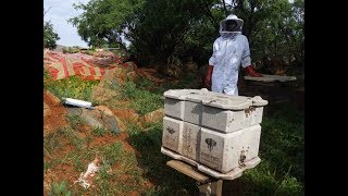 PPC One Vision - Beegin Accessible and Sustainable Beehive Project