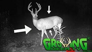 Deer Hunters: 10 Tips to Quickly Age Bucks (#406) @GrowingDeer.tv