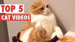 animale top 5 faze pisici ale saptamanii