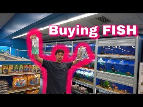 SICK Aquarium FISH!
