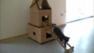Домик для Кошки из картона// домик для кошки своими руками