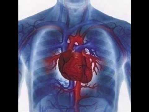 Rata de zahăr din sânge 19