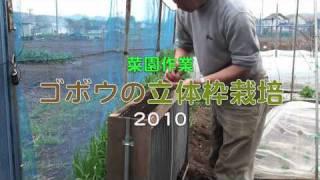 ゴボウの立体枠栽培