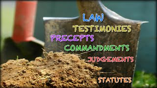 What Are the Differences of Law, Testimonies, Precepts, Commandments, Judgements, and Statutes?
