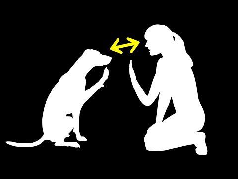 人類和狗的相似之處遠比我們預期的要強烈得多
